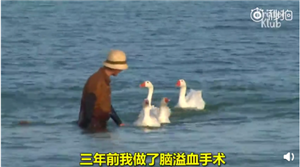 韩国奶奶的鹅保镖团