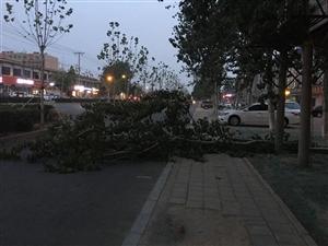 冀州信都路与金鸡大街交叉口西南角电厂家属院附近,一大树给折断了!堵着整条道