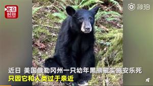 因�c人��^于�H近,美��一黑熊被�绦邪�匪�