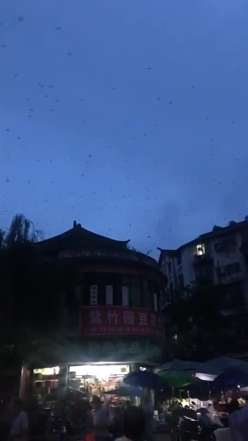 宜宾长宁震区燕群聚集?四川省地震局回应