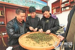 安溪去年培训两万多名茶农