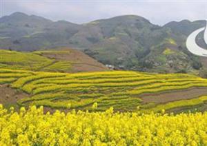 兴文县共乐镇的油菜花开了 美得让人心醉
