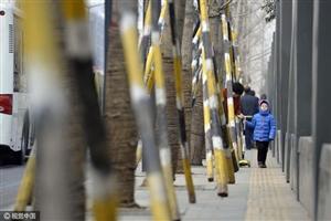 为稳固树木设支架 小南门附近人行道只剩盲道