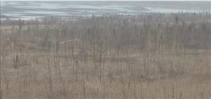 招远:水库几近干涸 库底变身大草原