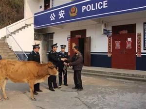 光山民警为农户找回被盗耕牛获锦旗