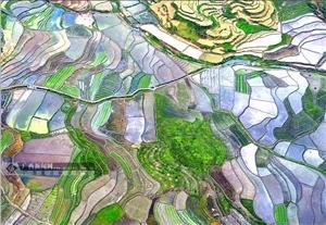 航拍:谷雨将至 罗城田园如画
