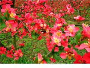 �h中四月里那些野花��