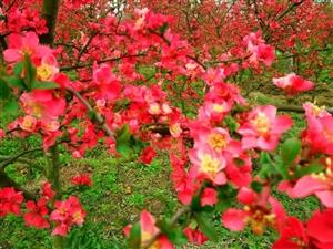 汉中四月里那些野花们