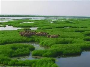 东洞庭湖注滋河口一次性监测到最大麋鹿群62头