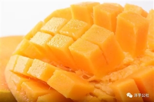 洋芋商城|    芒果上市季!最全的芒果介绍,吃货必备