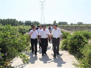 安徽农业大学专家组调研我县农业产业发展