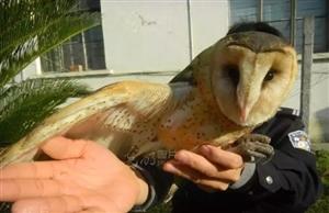 怪鸟落难被村民捡到 ,一查竟是国家二级保护动物