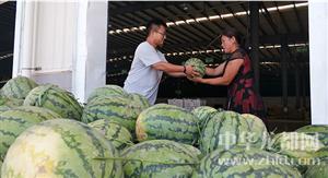 万果园的采购有力解决了当地瓜农的滞销难题