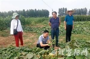 市农业局赴草埠湖镇指导抗旱工作