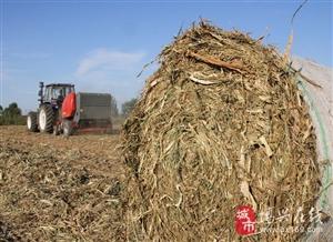 """博兴县吕艺镇采取""""政府推动、企业运作、农户参与""""的方式秸秆资源综合利用"""