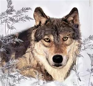 不懂感恩的人比狼还可怕!我看了五遍