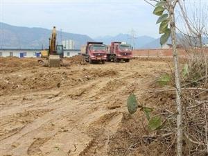 镇医院施工推倒村民约1亩樱花树苗 卫生院回复