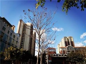 冬日暖阳下的会东县城