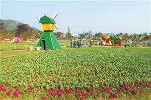 珠海市市属公园春节花展搭设已基本完毕 二十余万盆时花迎新春