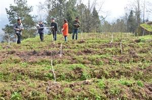 石柱三星乡积极推进农业产业结构调整