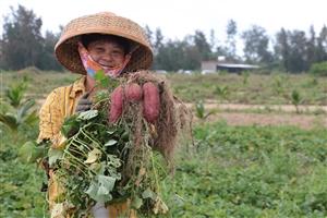 潭门海藻地瓜 ――用原生态的美味塑造潭门农产品品牌