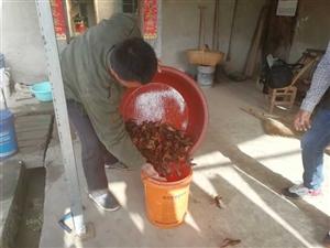 """小龙虾成掇刀区扶贫养殖的""""香饽饽"""""""
