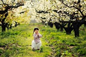 梨花深处是故乡