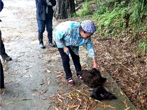 男子毒死邻居22只鸡 被黔江警方拘留10天