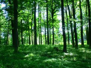 新开户送体验金市启动第五次森林资源普查