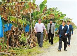 扶贫干部杨凯华牵头成立香蕉种植合作社 为潮观村贫困户增加收入