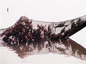 """鄂州三男子""""嘴馋"""" 下地笼偷龙虾被行拘"""
