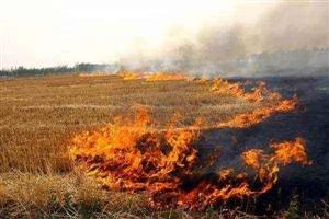市农业局:禁止秸秆焚烧 加强秸秆综合利用