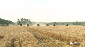 多家媒体聚焦我县优质小麦生产
