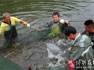 博兴县乔庄镇南美白对虾养殖喜获大丰收