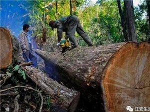 悲剧!宜宾两名男子砍树时突发意外,一死一伤!