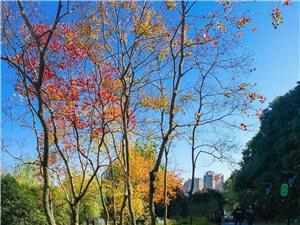 鄂州环湖生态公园色彩斑斓,简直美呆了!!!