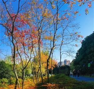 澳门真人博彩评级网址环湖生态公园色彩斑斓,简直美呆了!!!