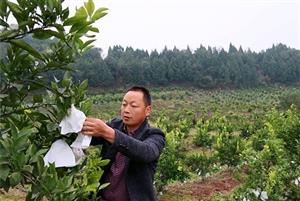 西充:回农村当职业农民 撂荒地变满园瓜果