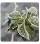 农业技术:什么是植物防冻剂?怎么用才有效果