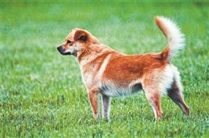 """遛狗不牵绳、不及时清理犬类粪便?多地出台""""最严""""犬类管理条例"""
