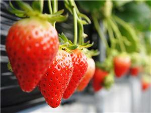 溧水优质农产品集结 绿色盛宴即将开启