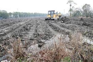 平整百亩土地 种植经济苗木