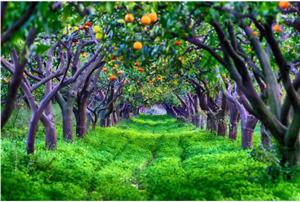 农业技术:果园生草好处多,但具体实施要避开这些坑!