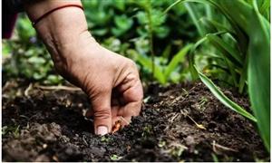 农业技术:为什么你家施下去的菌肥没有看到任何效果?施用菌肥有窍门!