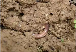 农业技术:土壤板结问题,这次终于讲透了!
