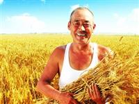 """中共中央 国务院关于坚持农业农村优先发展做好""""三农""""工作的若干意见"""