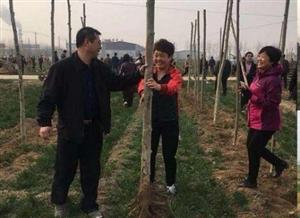 现场直击丨高邑市场监管局开展义务植树种植绿色希望,收获明日绚丽!