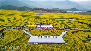 2019年仙居・第十二届浙江油菜花节已正式开游