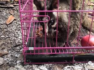 救助野生动物人人有责,筠连森警成功救助一只果子狸!