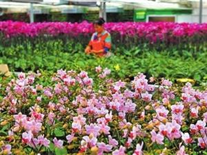 珠海文德兰农业科?#21152;?#38480;公司董事长景文德 探索培育种植新模式 打造兰花观光科技园